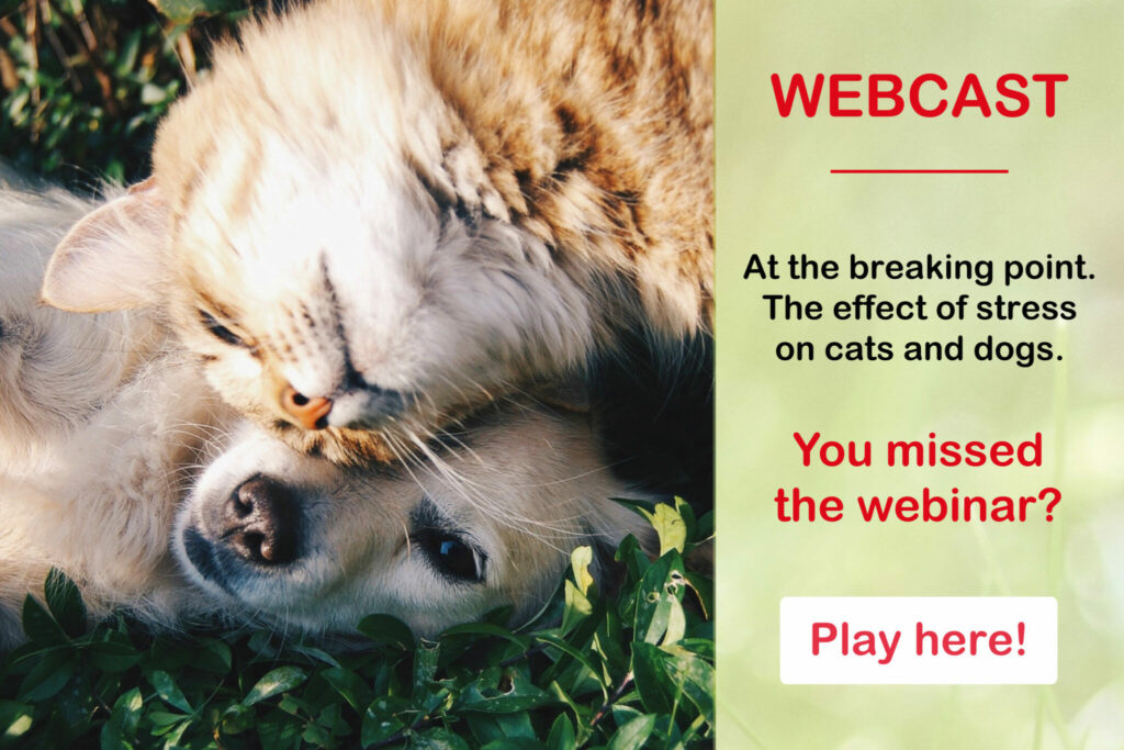 webinar us health pet care stress on cat and dog